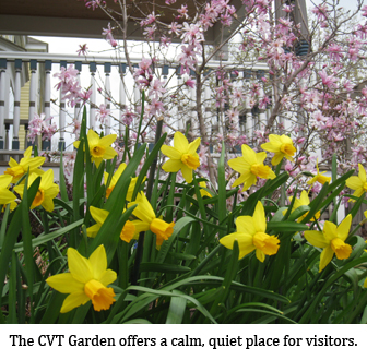 Daffodils and cherry blossoms are cheerful bursts of color in front of the CVT porch.